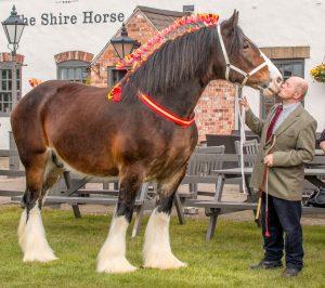 Meet greet shire horse meet greet m4hsunfo