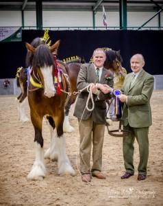 Champion Stallion