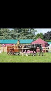 Jane Muntz-Torres - on Wagon